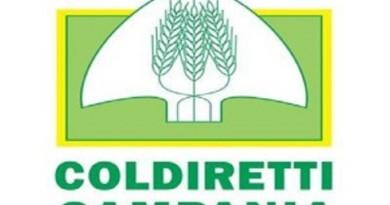 Infortuni: Coldiretti, il maggior calo è in agricoltura (-2,9%)