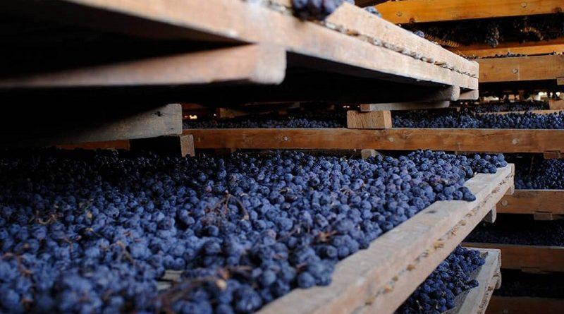 Alla scoperta dei territori vitivinicoli d'Italia degustazione tematica con Onav Avellino